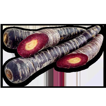 Schwarze Karotte