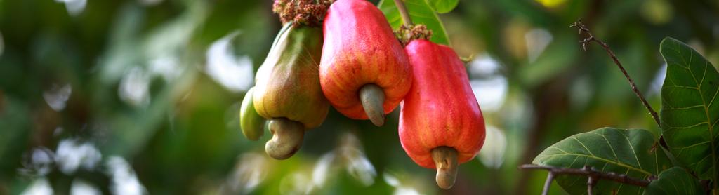 Cashew-Apfel